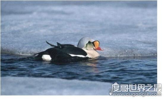 世界上最耐寒的动物排名,能在零下60度严寒生活的企鹅排名最后
