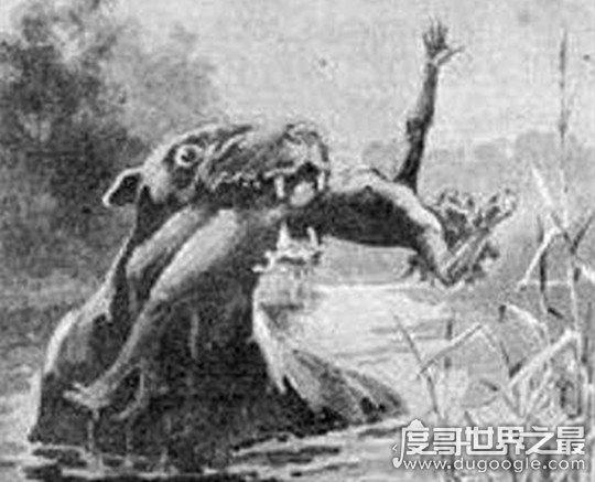 澳大利亚本耶普怪兽之谜,传说中食人兽(疑似远古生物双门齿兽)
