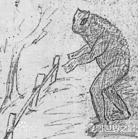神秘生物爱兰青蛙人是真的吗,未解之谜(样貌似青蛙可直立行走)