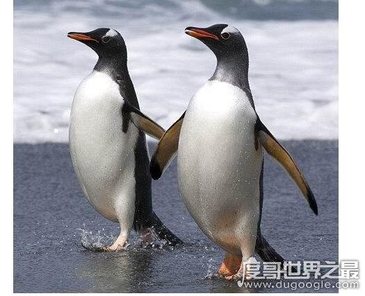 一夫一妻的动物盘点,它们结成伴侣之后就会不会背叛对方