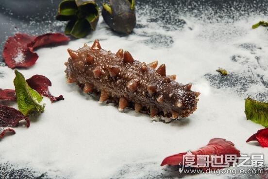 什么人不能吃海参,儿童和肾功能不好的人千万要慎食海参