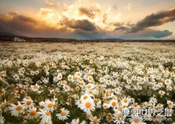 世界十大绝美花海,每一处都是美丽浪漫的最佳告白之地