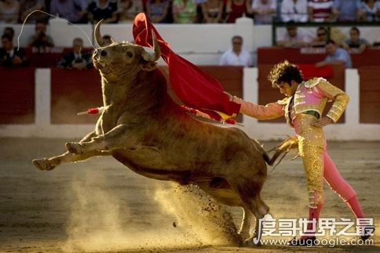 西班牙斗牛士为什么要挥舞红色的布,吸引人的注意(牛是色盲)