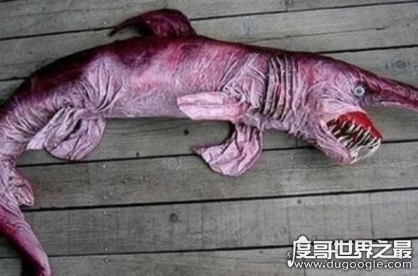 活化石动物大盘点,盘点10大活化石动物(都极具研究价值)