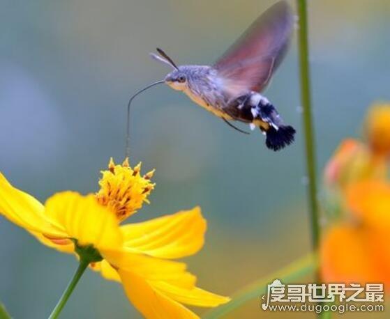 世界上最小的鸟盘点,蜂鸟身长不超过5厘米(大小和蜜蜂差不多)