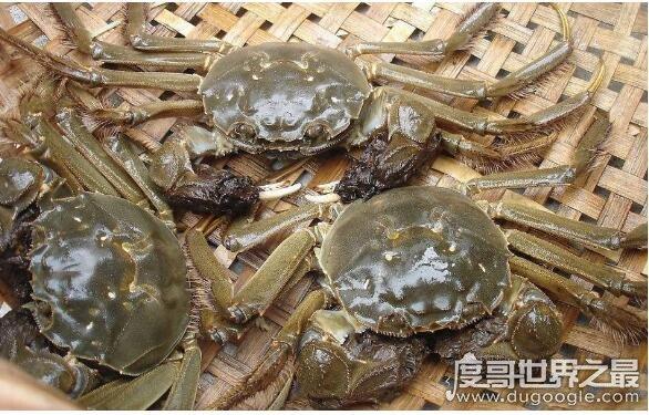 大闸蟹死了多久不能吃,死了之后就最好不要吃(不然会腹泻中毒)
