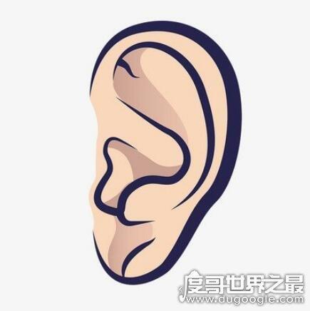人的五官指什么,眼/耳/鼻/眉/口(人体的五种感觉器官)
