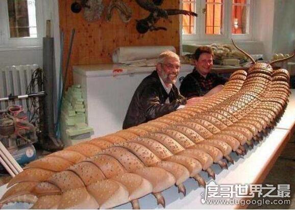地球史上最大蜈蚣,远古蜈蚣虫(体型巨大长达2.6米)