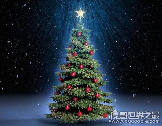 圣诞树是什么树,经过装饰的常青树(松柏类的树比较常见)