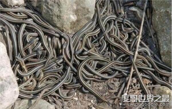 世界十大恐怖蛇岛排名,巴西蛇岛每平米9条蛇(被称为人间地狱)