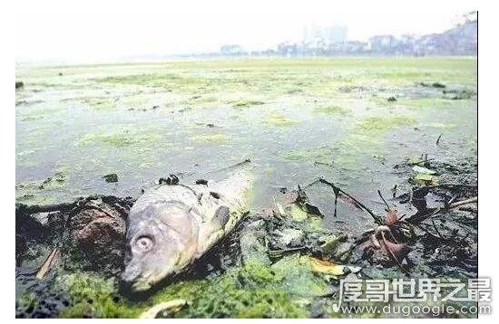 世界上最脏的河排名,印尼的芝塔龙河比恒河更恐怖(满河垃圾)