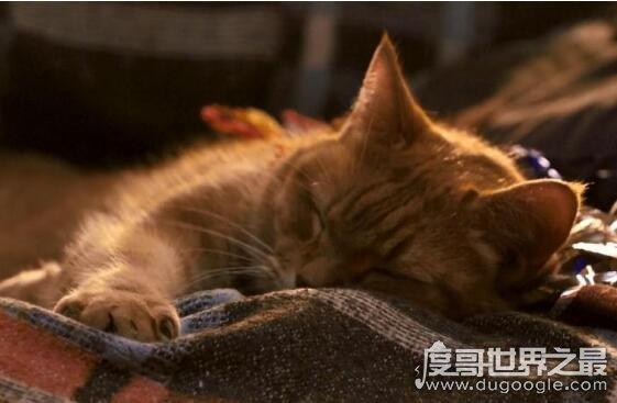 流浪猫鲍勃原型现状,本尊出演电影后迎娶母猫(生活幸福)