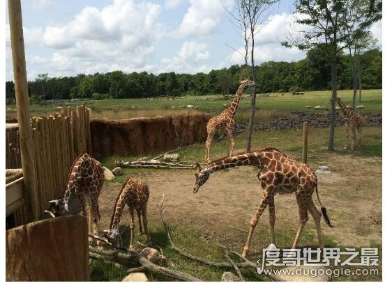 世界上最大的动物园排名,榜首是柏林动物园(面积350000平方米)