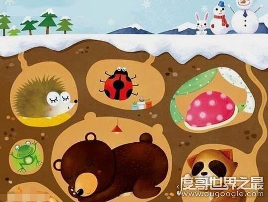 动物为什么要冬眠,主要是为了抵御寒冷(躲避冬季食物匮乏)