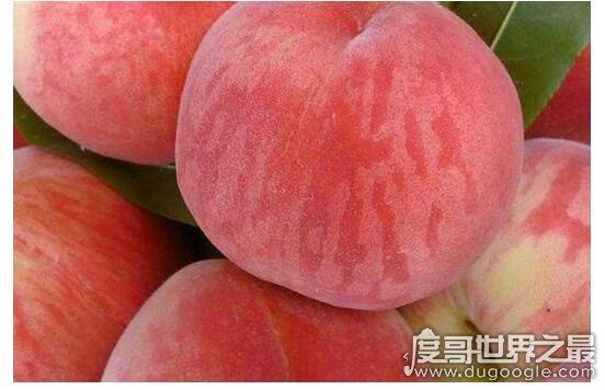 世界上最大的桃子,河北翟家佐村种出单颗2.1斤的超大桃子