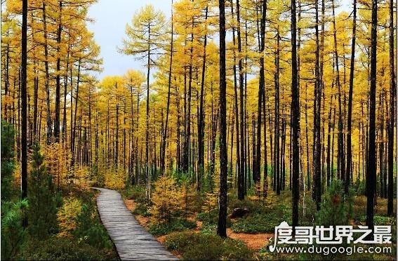 中国最大的森林排名,大兴安岭的森林面积有8.17万平方千米