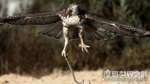 亿年前凶猛古鸟类,从琥珀中发现迷你猛禽(看起来小却很凶)