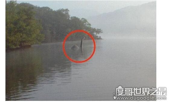 传闻中的尼斯湖水怪图片,真相已被揭开(疑似巨型鳗鱼)
