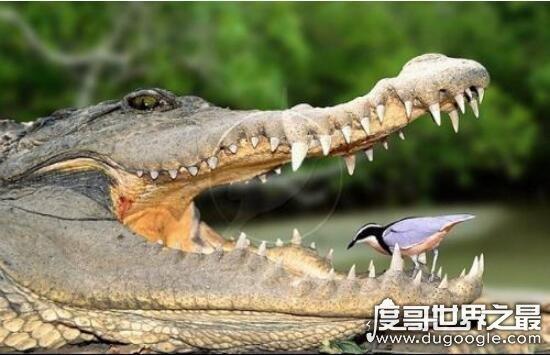 关于鸟的世界之最,盘点世界上那些奇异鸟类(军舰鸟飞行速度最快)