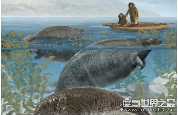 特斯拉海牛灭绝的原因,肉质太美味,被人类大量的捕捞