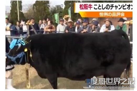 世界上最贵的牛诞生,1头牛168万人民币(这头牛重大678公斤)