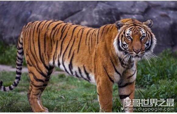 神农架罕见动物有哪些,盘点五种神农架特有的珍惜罕见动物