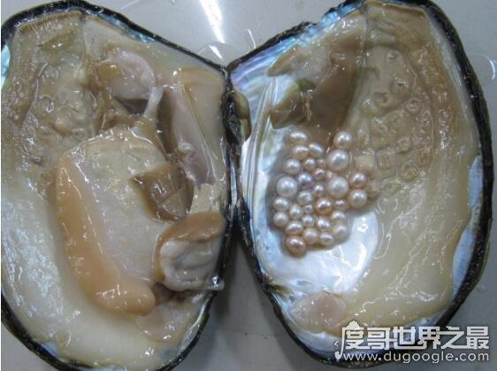 珍珠为什�r于天么长在贝壳里,珍珠是贝类被外物入侵后分泌形成的东西