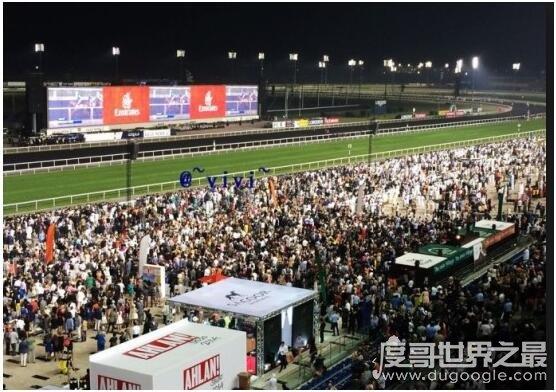 苹果彩票福利网站最奢华的比赛,迪拜赛马世界杯(一天颁发2千多万美元奖金)