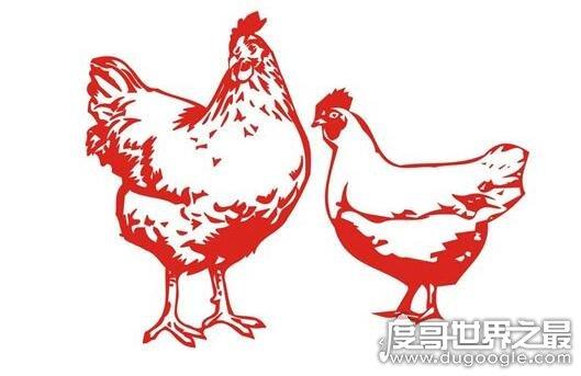 成语牝鸡司晨是什么意思,就是指母鸡报晓(牝鸡司晨的典故)