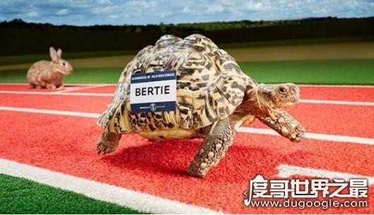 动物界中最快的猎食者,星鼻鼹鼠(能在1/4秒的时间里完成捕食)