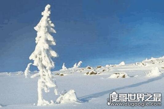 世界上最老的荔枝树,宋家香古荔树(距今已有1200多年历史)