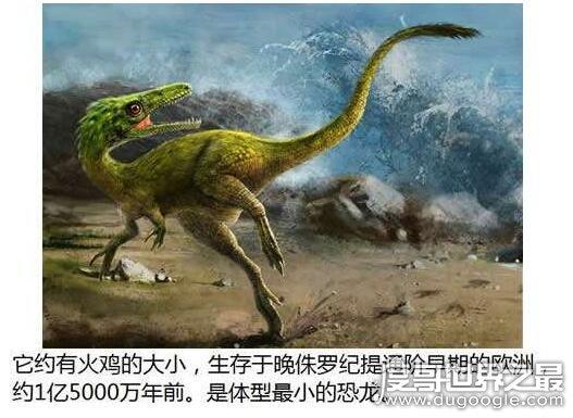 远古时期最小的恐龙,美颌龙(它和现代火鸡差不多大)