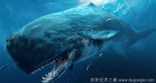 梅尔维尔鲸牙齿超大 盘点地球史前十大巨兽