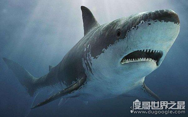 世界上最危险的鲨鱼王,海洋中无可匹敌(居于深海)