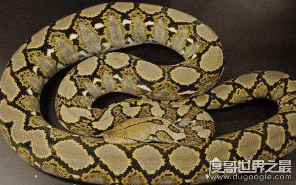 十大传说巨蛇,部分确出现在真实世界(泰坦蟒居首位)