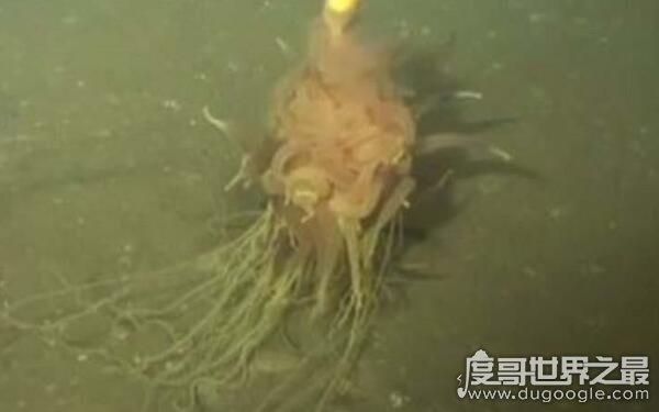 世界上无法解释的生物,无毛水怪现身深圳水库