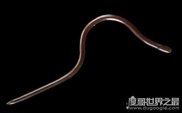 世界上最稀有的蛇,卡拉细盲蛇身长仅10厘米(和蚯蚓差不多)