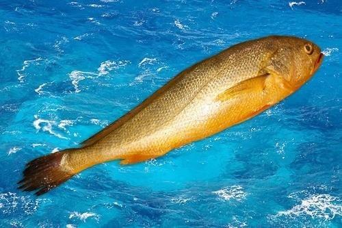 世界上最贵的鱼排名,蓝鳍金枪鱼最贵2119万元/条(经济价值极高)