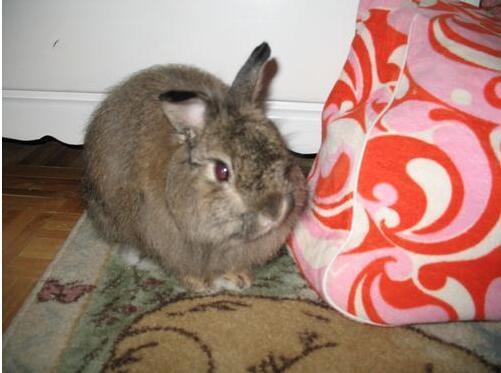 最新老虎机:上最长寿的兔子,17岁零2周(关于兔子的最新老虎机:纪录)