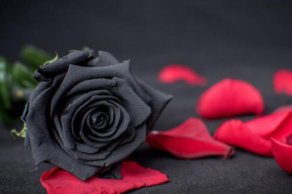 世界上真的有黑玫瑰吗,产自土耳其数量极其稀少(象征死亡)