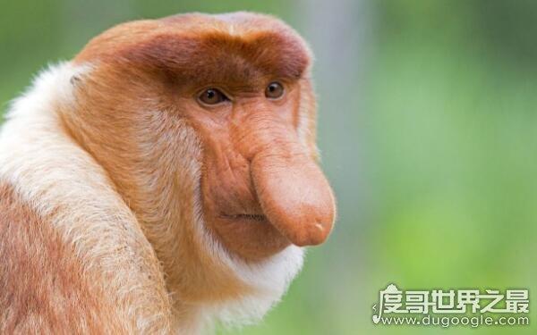 世界上十大最恶心的动物,外形丑陋令人恶心(大多外形独特)