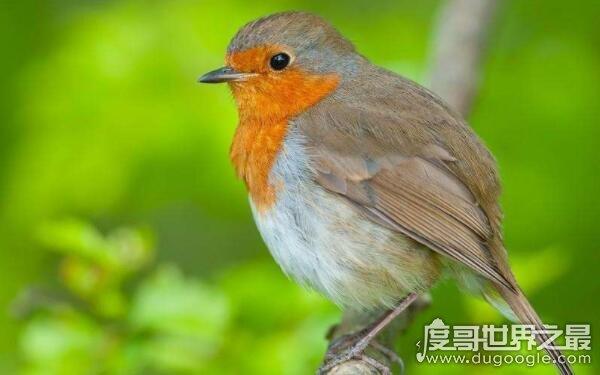 世界上鸟最多的地方,占世界鸟类总数的13%(中国)